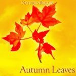NOX - Autumn Leaves